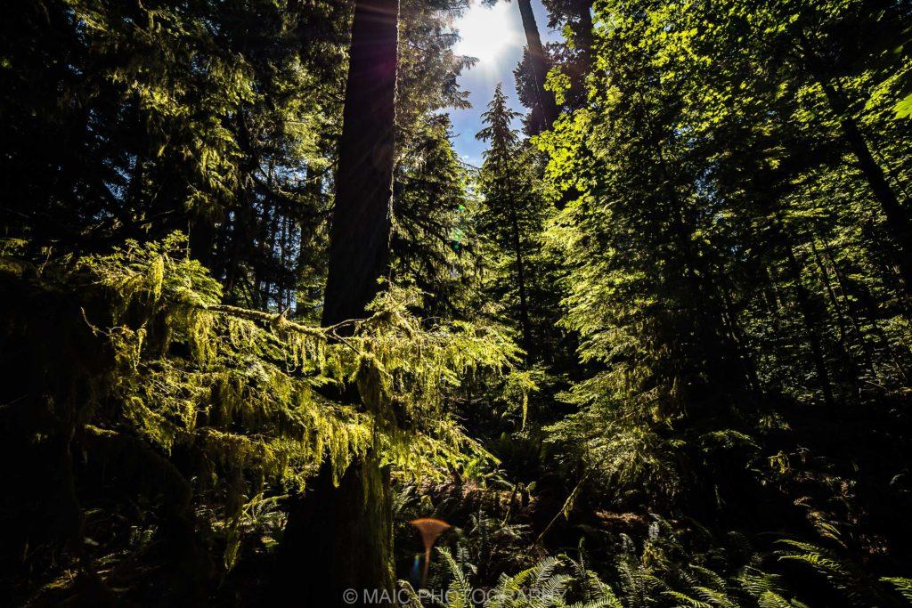 Canada-blog-fotografie-Maico-Barneveld-11