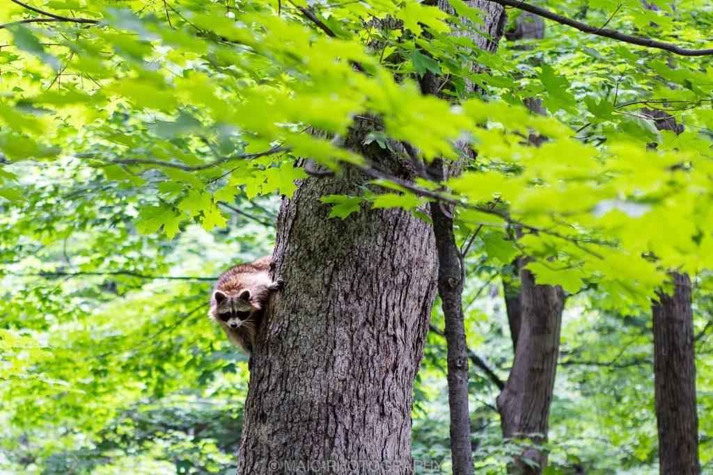 Canada-blog-fotografie-Maico-Barneveld-146