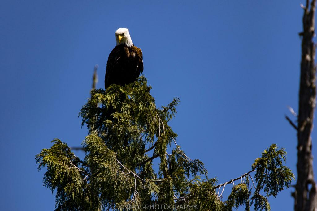 Canada-blog-fotografie-Maico-Barneveld-29