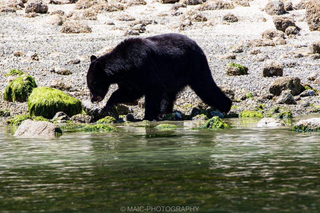Canada-blog-fotografie-Maico-Barneveld-32